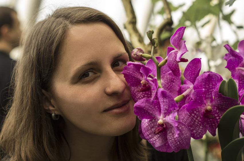 mon orchidée en fleurs